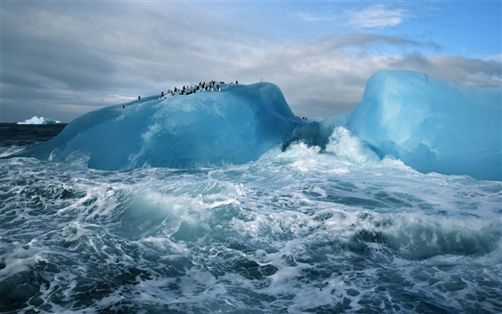 Wallpaper Cold arctic, blue ice and sea water, penguins