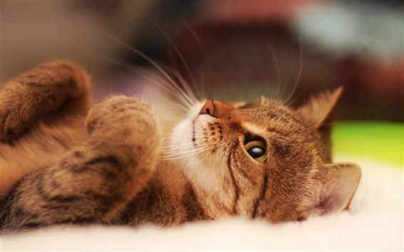 Papéis de Parede Vem brincar comigo, eu era um gato se comportou