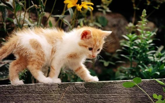 Fondos de pantalla Lindo gatito caminando