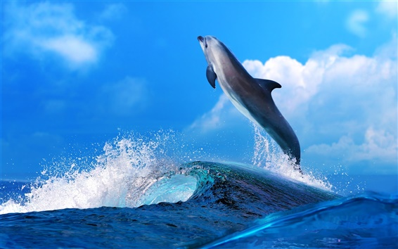 Wallpaper Dolphin beautiful dance, sea waves splash