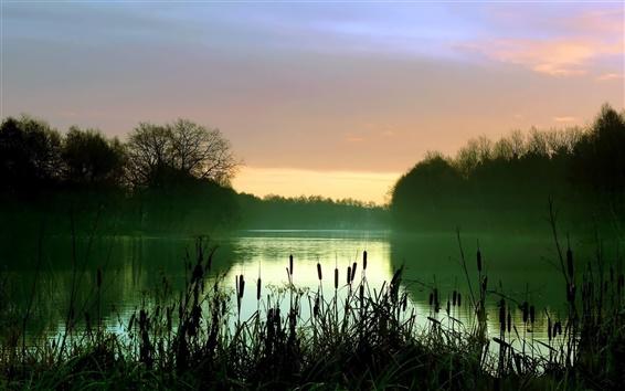 Обои Рано утром озерные пейзажи, туман, камыши, деревья
