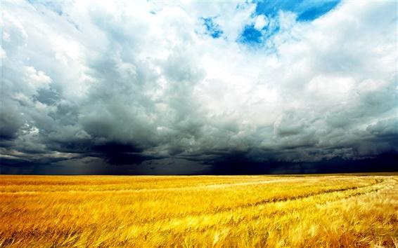 Wallpaper Golden wheat fields, clouds sky, storm coming