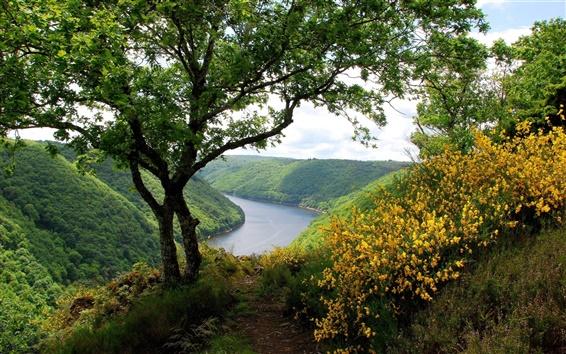 Wallpaper Greenery scenery, hills, river, trees