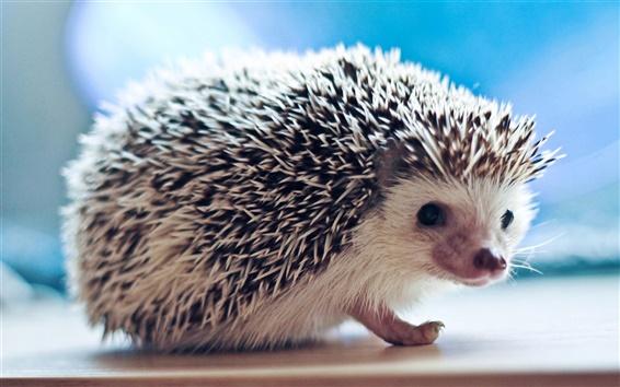 Papéis de Parede Hedgehog macro fotografia