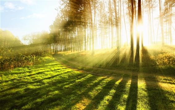 Обои В солнечном свете летнего леса, яркие лучи