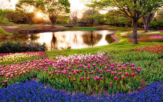 Wallpaper Japan, Tokyo, morning scenery in the park, sunrise, pond, trees, flowers
