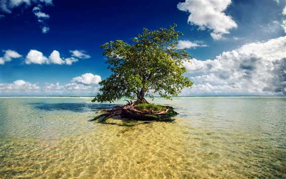 Wallpaper Mayan Riviera, Mexico, one tree in the sea water