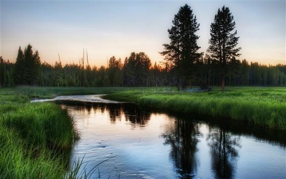 Обои Природа лес, трава, река, рассвет