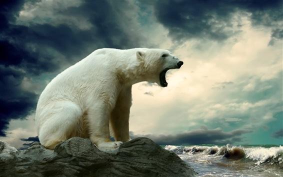 Wallpaper Polar bear at the sea coast