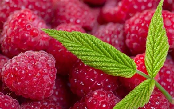 Wallpaper Red raspberry berries, green leaves