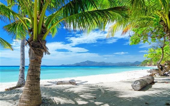 Fondos de pantalla Verano playa, arena, palmeras