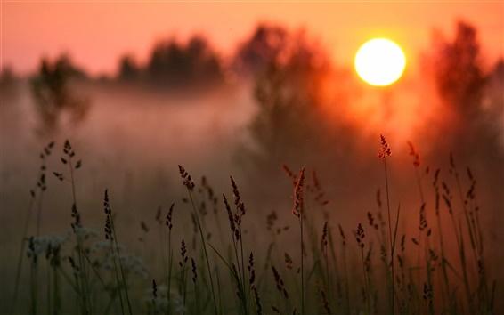 Обои Закат, лес, трава, теплое солнце