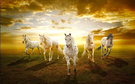 Wallpaper White horses in the prairie sunset
