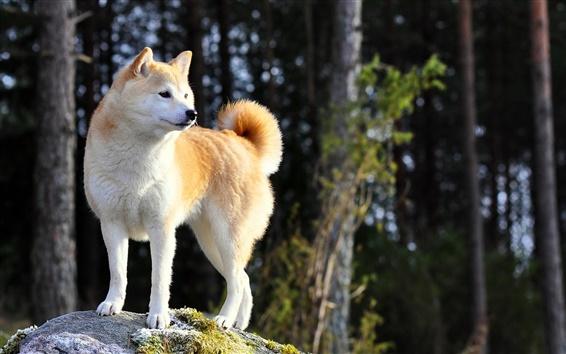 Fondos de pantalla Un perro en el bosque