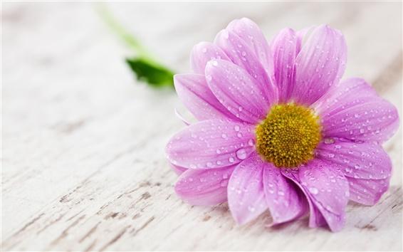 Fond d'écran Une fleur rose pétales avec des gouttes d'eau macro photographie
