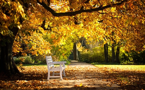 Wallpaper Autumn park, bench, yellow leaves