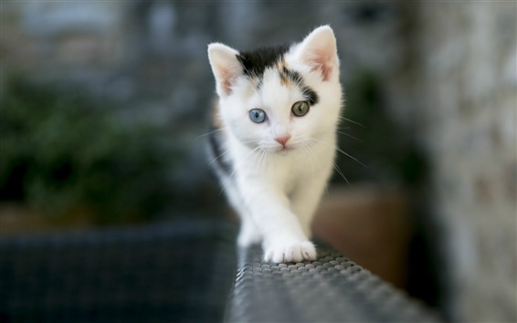 Wallpaper Brave kitten