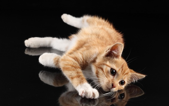 Wallpaper Cute cat, white paws, lying at desktop, reflection, black background