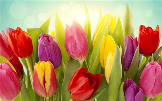 Wallpaper Different colors of tulip flowers
