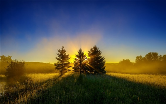Wallpaper Early morning, mist, nature landscape, sunrise, trees