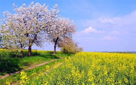 Fond d'écran Allemagne printemps paysage de nature, champs, fleurs, ciel bleu