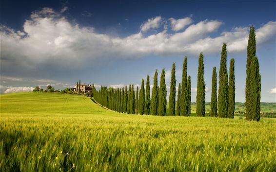 Wallpaper Italy, Campania, spring scenery, fields, tree, house, sky, green