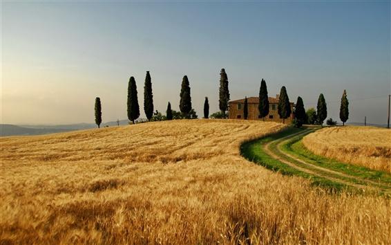 Papéis de Parede Itália, paisagem de outono, os campos de trigo, árvores, casa