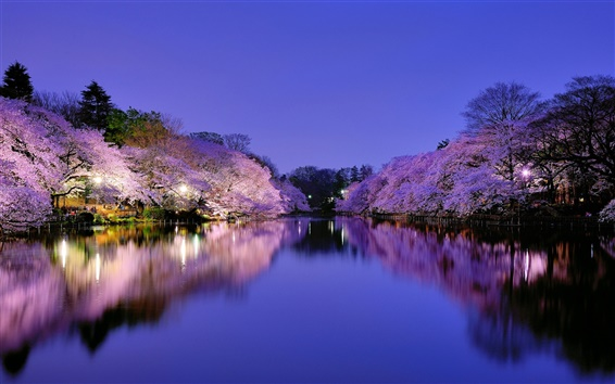 Wallpaper Japan, Osaka, city park at night, lake, lights, cherry trees flowering