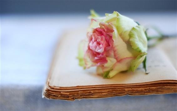 배경 화면 장미 꽃과 오래 된 책