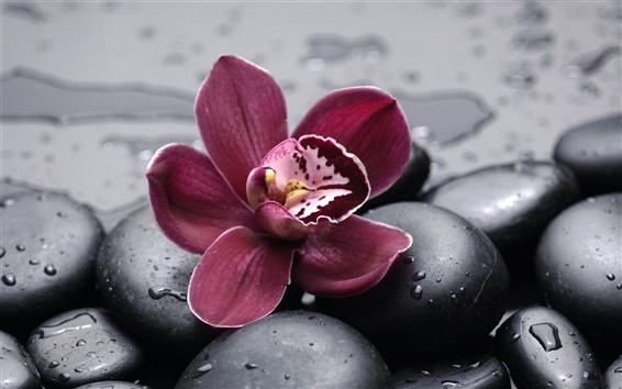 Papéis de Parede Orquídea e seixos close-up