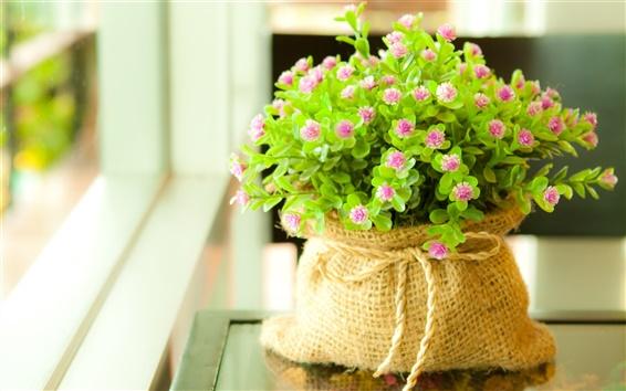 Papéis de Parede Vasos de flores no peitoril da janela
