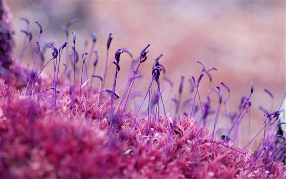 Wallpaper Purple plant germination