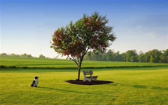 Fond d'écran Herbe de printemps, la lumière du soleil du matin, chien, banc, arbre, vert