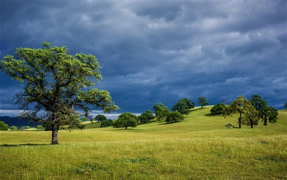 Wallpaper Spring nature landscape, USA California, hills, grass, trees, cloudy
