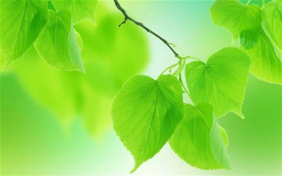 Fond d'écran Vert d'été laisse close-up, arrière-plan flou