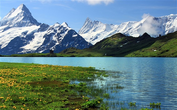 Wallpaper Switzerland, Bern, nature scenery, snowy mountains, river, grass, flowers