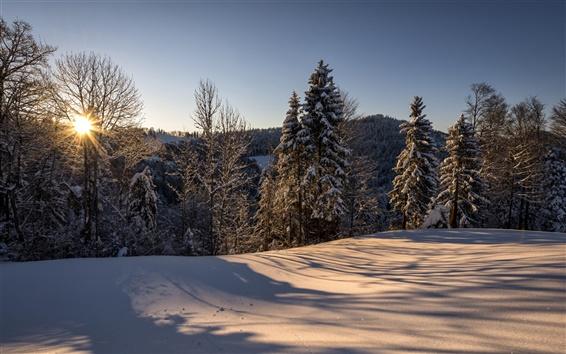 Fondos de pantalla Suiza, Hulftegg, naturaleza, paisaje, invierno, mañana, sol, bosque, nieve