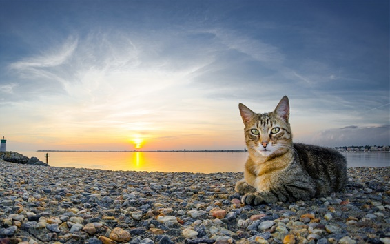 Wallpaper Cat at coast sunset