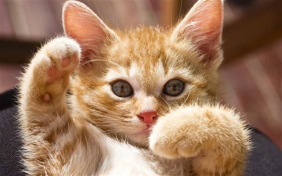 Обои Симпатичный котенок позу
