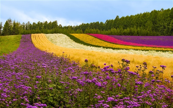 Wallpaper Different color flowers field, trees, Japan