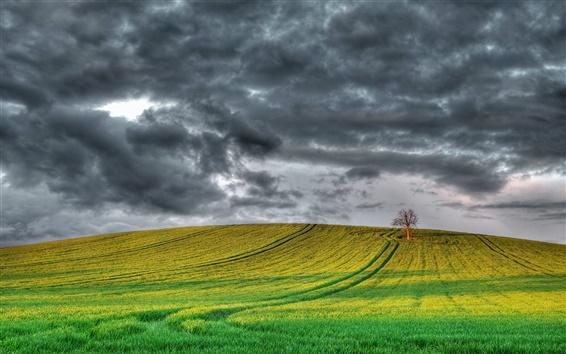 Wallpaper England scenery, fields, tree, cloudy sky