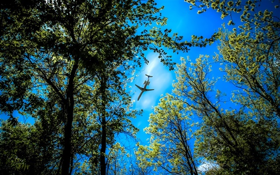 Wallpaper Forest trees, blue sky, plane flying over the forest