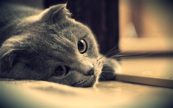 Wallpaper Gray cat eyes close-up