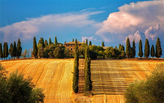 Wallpaper Italy, Siena, Tuscany, trees, cypresses, fields, house, summer