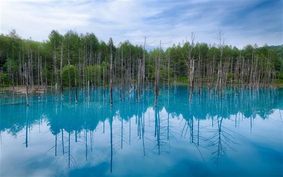 Fondos de pantalla Japón Hokkaido, laguna azul, reflexión de agua, árboles, el cielo azul