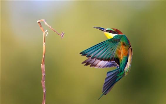 Fondos de pantalla Kingfisher vuelo fotografía ultrarrápida