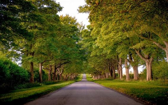 Fond d'écran Kings Avenue, Sandringham, Norfolk, Angleterre, arbres, route