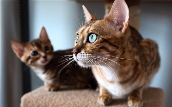 Wallpaper Kitten look window, cat face close-up
