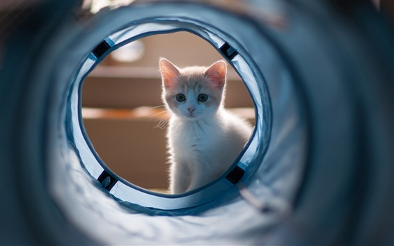Wallpaper Kitten looking at the pipeline