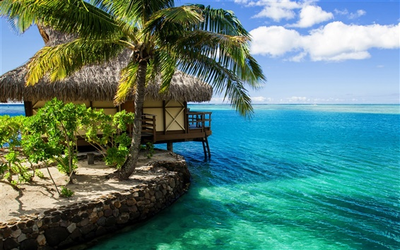 Fond d'écran Maldives, cabane, palmier, l'eau de mer